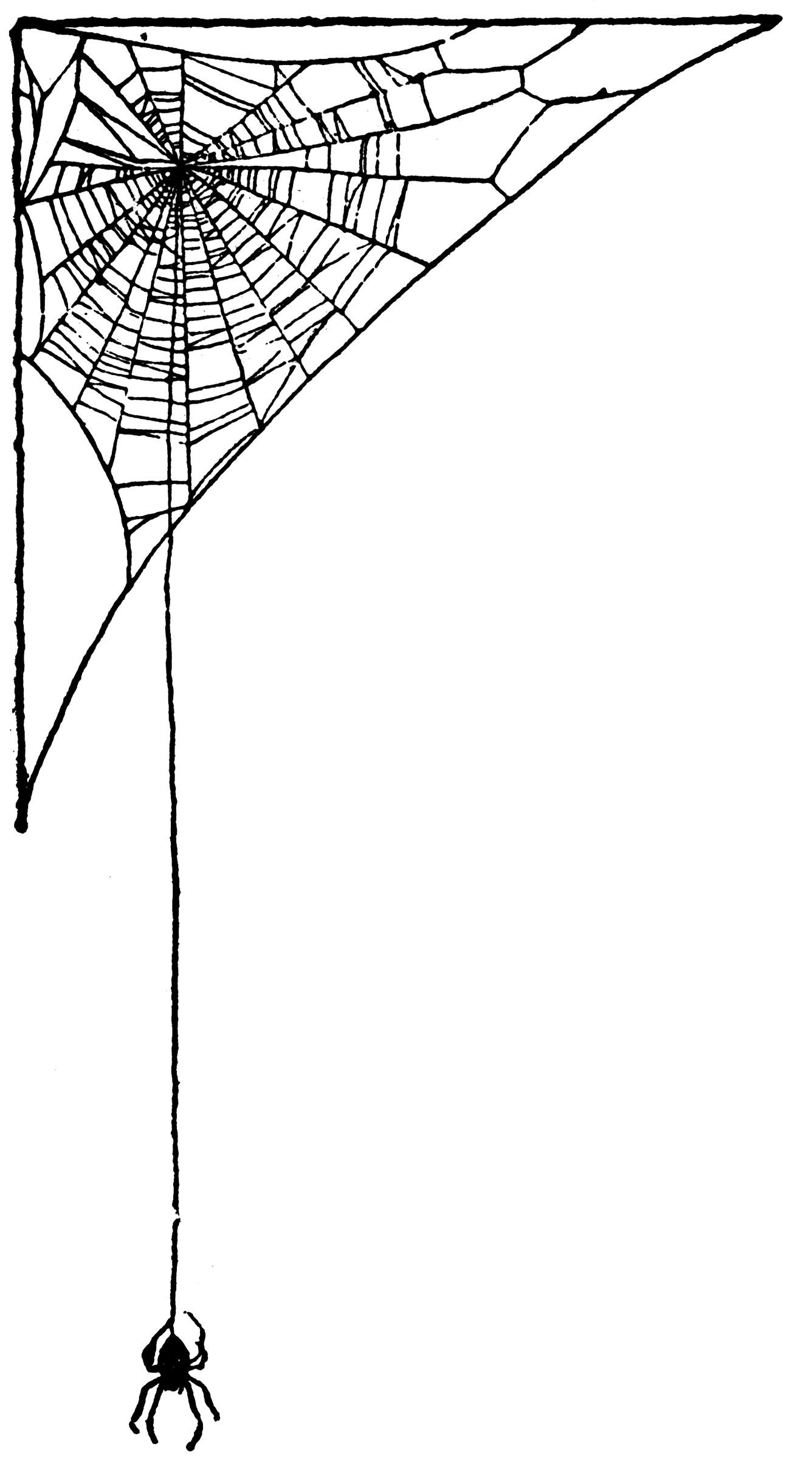 Corner spider web design - photo#13